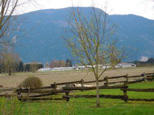 fence_n_barn