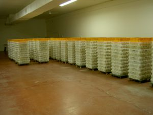 Thousands of chicks waiting for a delivery truck